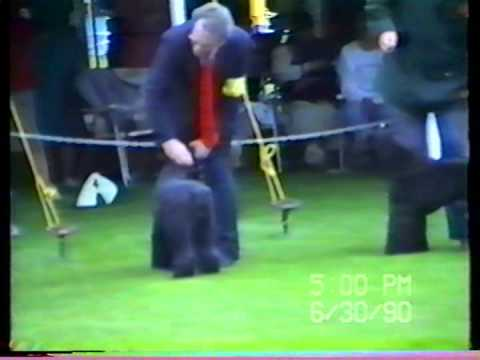 Kerry Blue Terrier Club of Canada 1990 part THREE