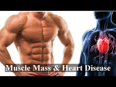 Muscle Mass & Death From Heart Disease