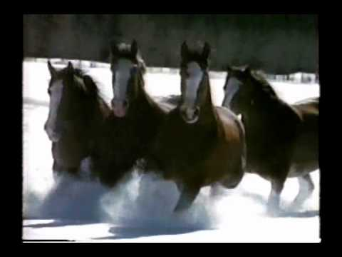 1992 Budweiser Beer Clydesdale Horse Commercial YouTube