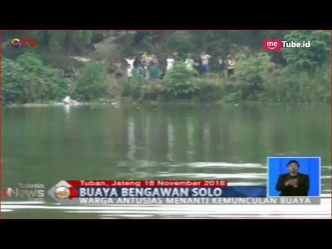 Warga Kabupaten Tuban Temukan 6 Ekor Buaya di Sungai Bengawan Solo -  BIS 18/11