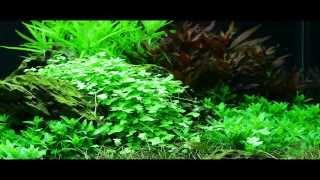 Дизайн 300 литрового аквариума своими руками(При дизайне аквариума своими руками обратите внимание, как концентрирует взгляд на себе возвышающаяся..., 2013-12-03T15:27:57.000Z)
