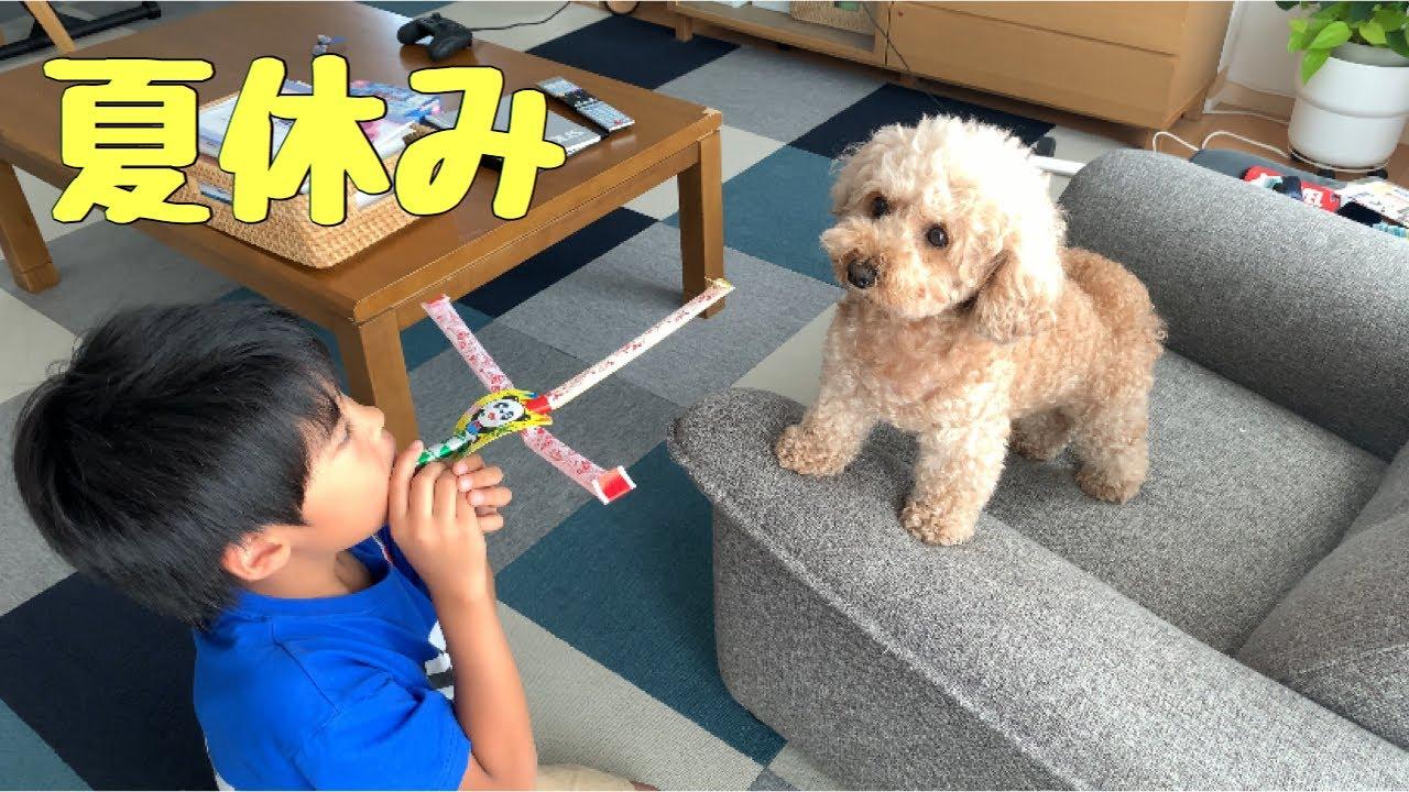 【夏休み】やんちゃな小学生が動じない犬に絡むとこうなるw トイプードル /マルプー