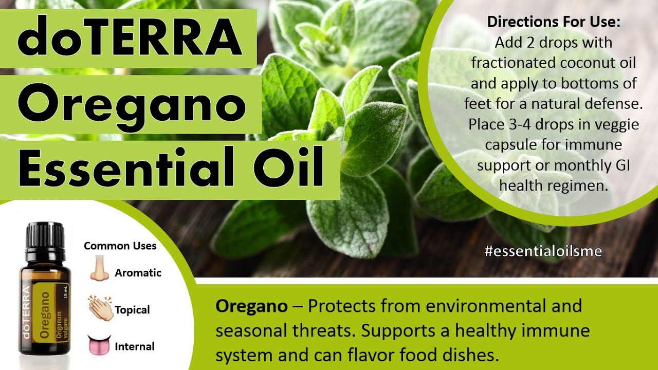 How to Use Oregano Oil How to Use Oregano Oil new picture