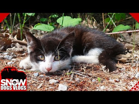 We Found a Hurt Kitten