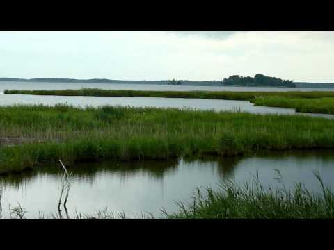 Water Scenes from Blackwater National WIldlife Refuge