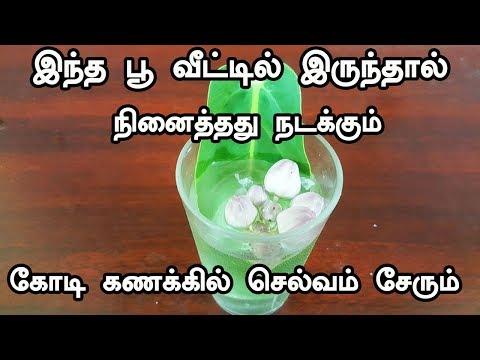 இந்த பூ வீட்டில் இருந்தால் நினைத்தது நடக்கும் கோடி கணக்கில் செல்வம் சேரும் - vasiyam sarvalogam