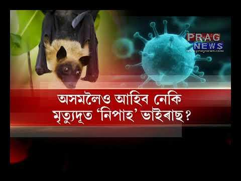 NIPAH virus || After Kerala Bengaluru  In fear of Infection