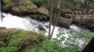 Ketchikan Salmon Run