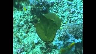 Каракатица - универсальный шппион - осьминог.