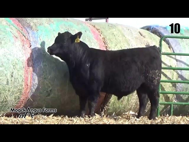 Mogck Angus Farms Lot 10