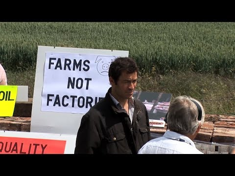 Dominic West opposes plans to build a factory pig farm