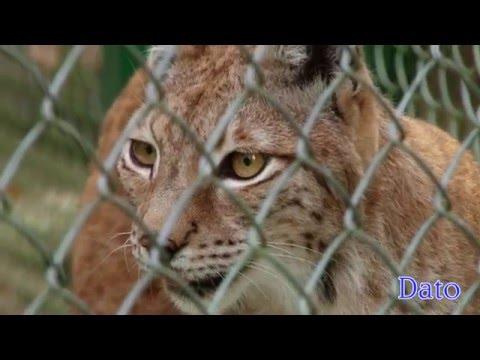 Хищники и животный мир Кавказа 2015  Predators And Fauna Of The Caucasus