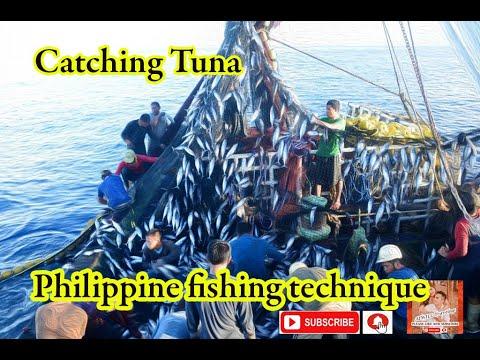 Philippine Tuna Fishing | Purse Seine & Ringnet Fishing | Catching Tuna | Payao Fishing
