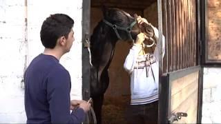 Insieme con i cavalli MR YAITOY - FUTURO ANTERIORE