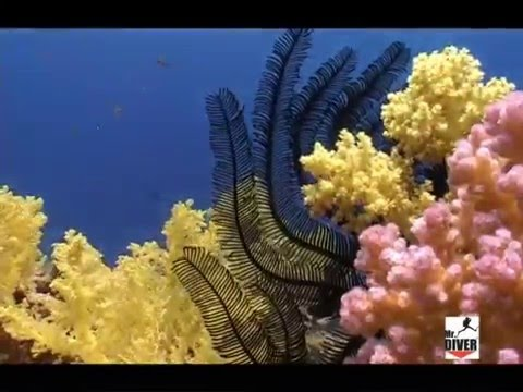 Red Sea, Mar Rosso, Sharm El Sheikh, Ras Mohamed, Gulf of Suez