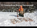 Snowshoe Hare Hunting Febuary 4th, 2017.