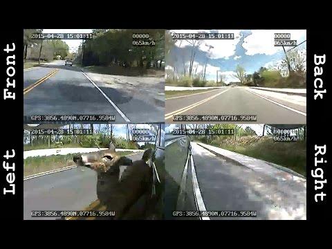 Deer Runs Into Car!!! Captured With A 360 Degree Dashcam!!!
