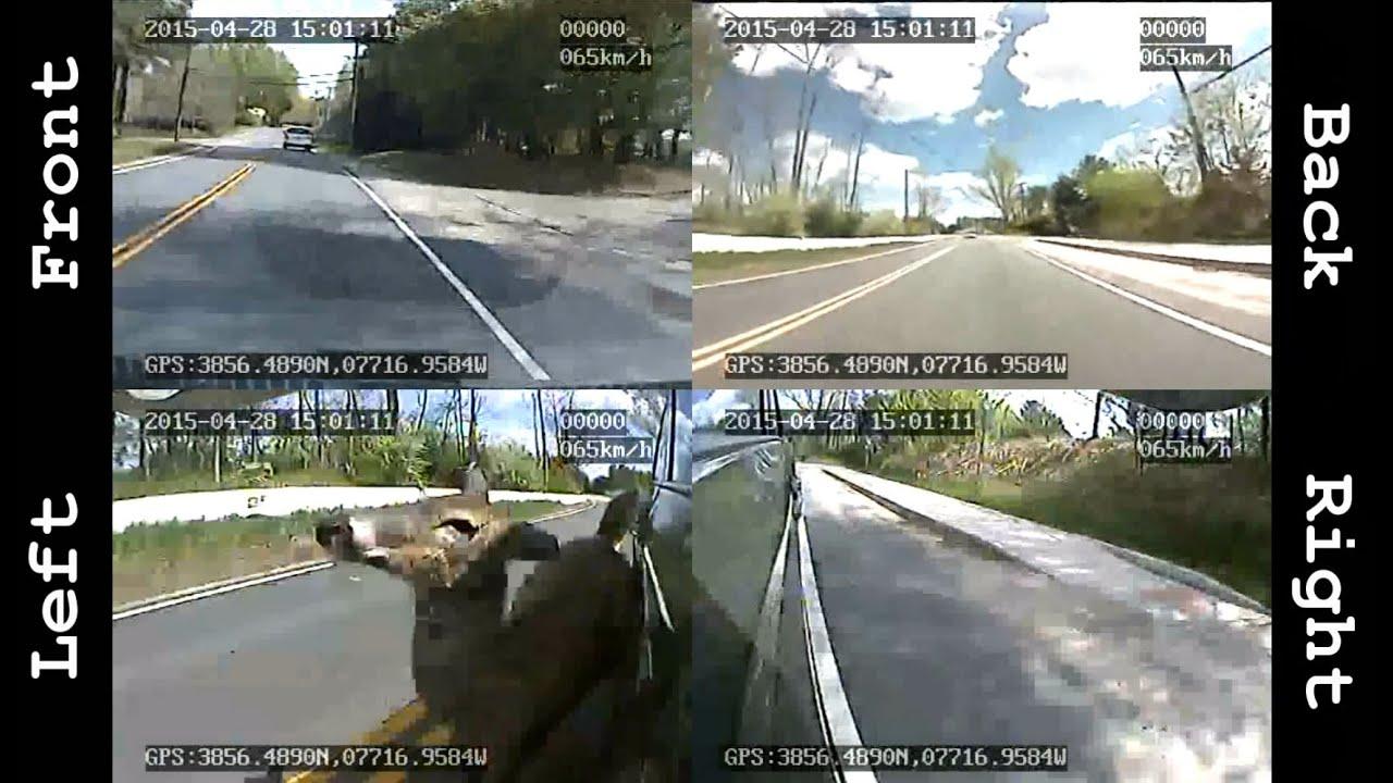 deer runs into car captured with a 360 degree dashcam. Black Bedroom Furniture Sets. Home Design Ideas