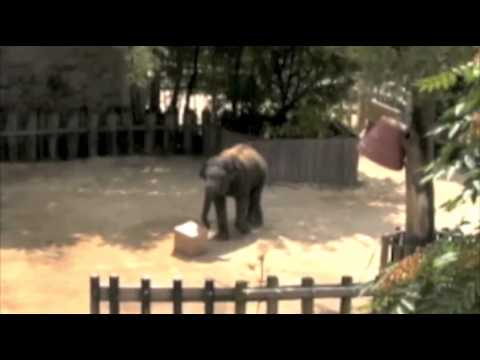 Elephant proves it's highly intelligent in test.