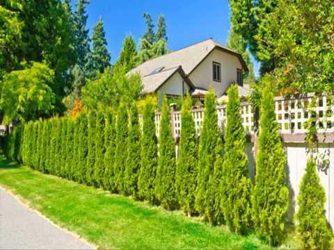 ขาย ต้น โมก พร้อม ปลูก ทั่ว ประเทศ ขายต้นไม้ อุดมสุข