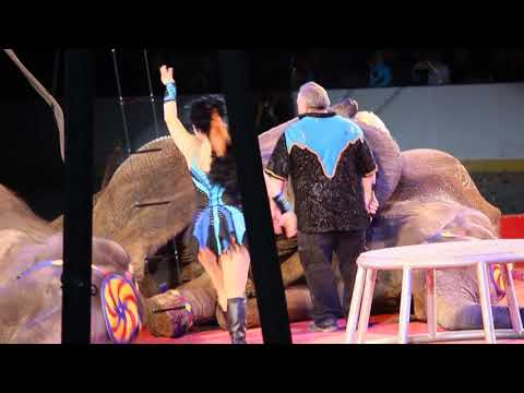 Brian Franzen Hits and Yanks Elephants With Bullhook at Shrine Circus