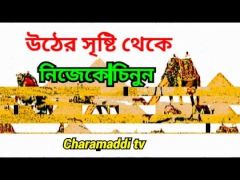 Download উঠের সৃষ্টি থেকে নিজেকে কি,ভাভে চিন্তে পারবেন। camel life history।charamaddi tv