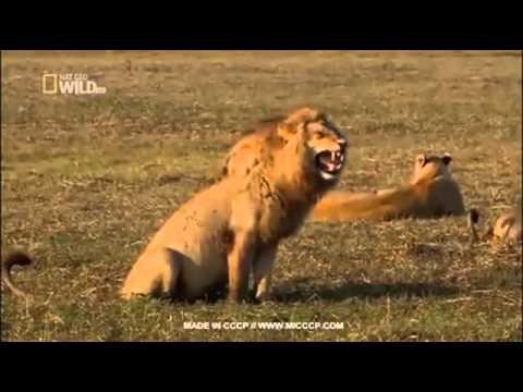สิงโตหัวเราะเเบบฮาๆ