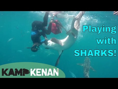 Swimming with Shark Addicts!