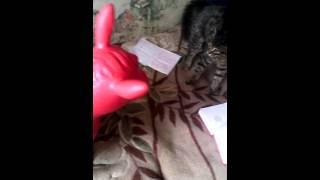 Download Video Очень злой Мерлин Мэнсон!!!)))) MP3 3GP MP4