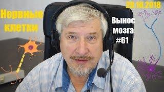 «Нервные клетки» Сергей Савельев (Вынос мозга #61)