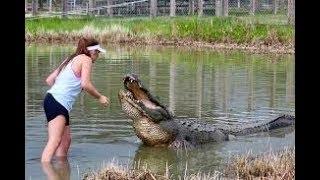 Ужасы в парке Флориды, аллигатор