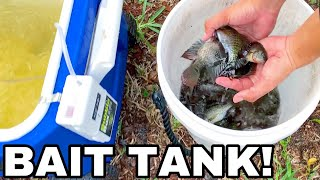 DIY AQUARIUM BAIT TANK for LIVE POND FEEDINGS!