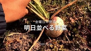 明日金曜日並べる野菜です 昔ながらの野菜を無農薬で育てています 阪急六甲の鍼灸院前で直売しています(火曜日と金曜日お昼頃) 当菜園の...