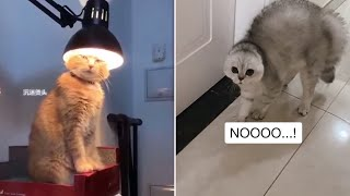 Cat  Side of TikTok Compilation