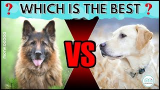 Which is the best dog breed? German Shepherd or Labrador Retriever.