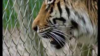 (7) Sur la terre des monstres disparus - Le triomphe des mammiferes