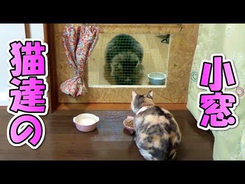 猫部屋にねこ達の小窓を制作!二匹の反応に感動するも、最後はやっぱり‥ Small window of cats
