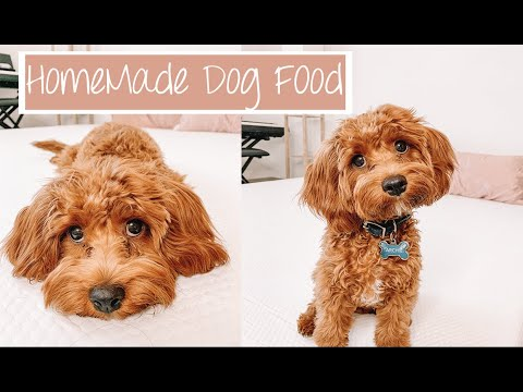 Cavapoo Puppy Life Q&A | My Home Made Dog Food Recipe