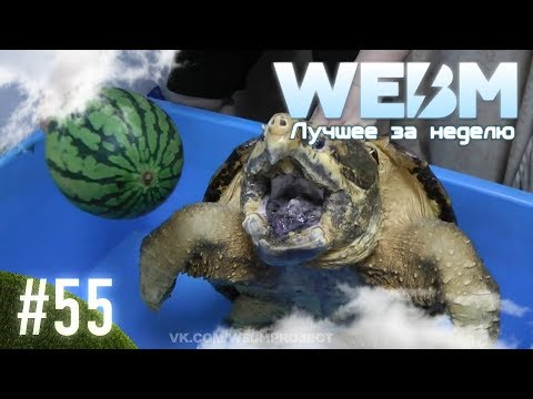 Dank WebM Compilation #55