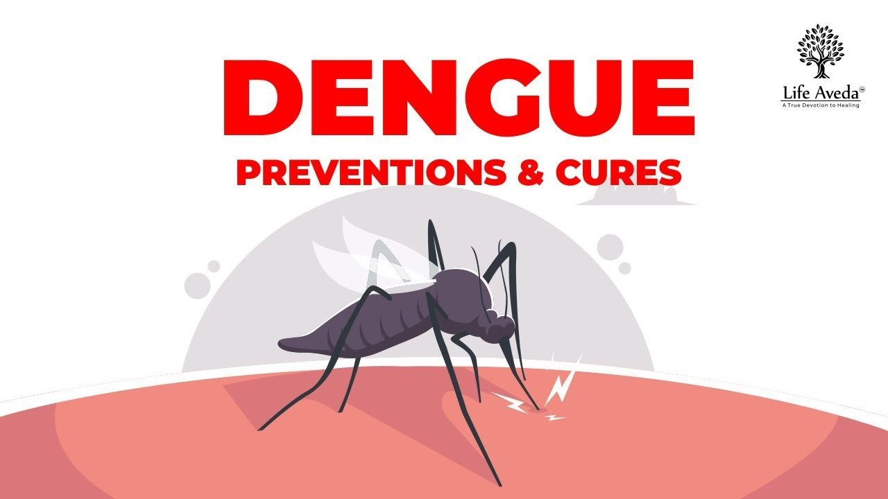 Dengue  Prevention and Cures | Ayurvedic Treatment for Dengue