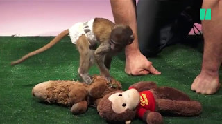 Cute Baby Animals Meet Their Stuffed Counterparts thumbnail