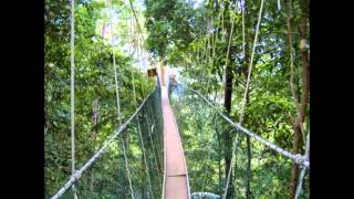 Taman Negara National Park - Tourist Attractions In Malaysia