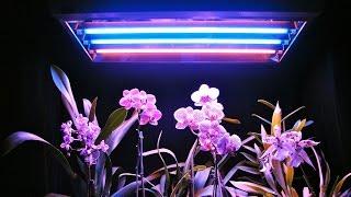 Фитолампы, для чего они нужны, сравнение растений с лампой и без(, 2017-04-13T11:56:50.000Z)