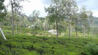 Sri  Lanka,ශ්‍රී ලංකා,Ceylon,Tea Plantation Lunugala to Passara Rd A5