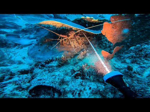 Crayfish Diving WA