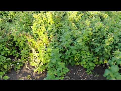 Питомник плодовых и декоративных растений в г. Россошь