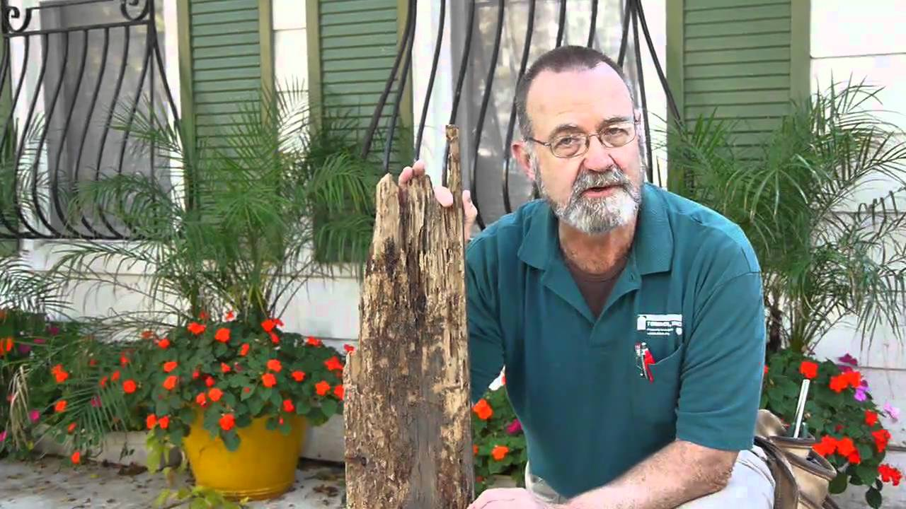 Home inspections in Chicago: Tom Corbett on termite damage