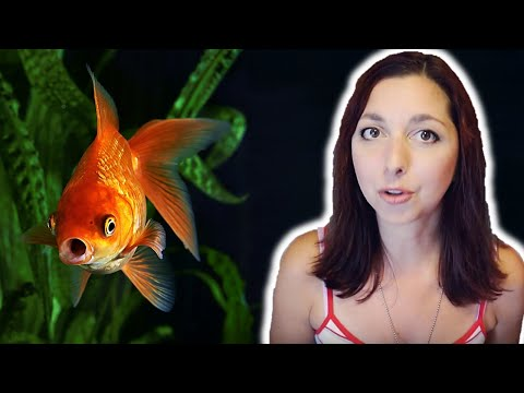 Goldfish Beginner Care Guide | Basic Care For Goldfish