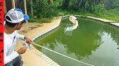 SAVING FISH in ABANDONED SWIMMING POOL! Fishing them Out
