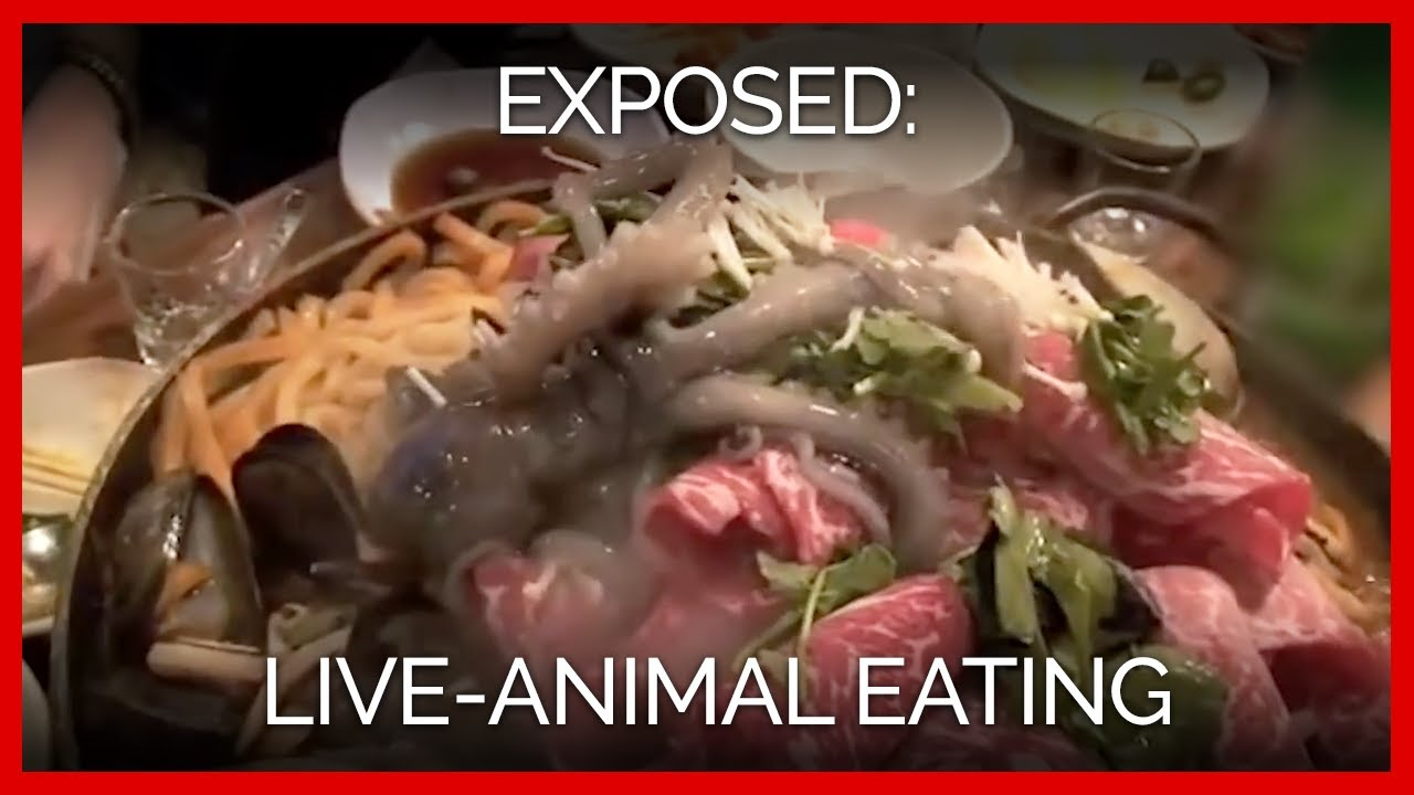 3 Shocking Videos to Remind You Octopuses Aren't Food | PETA